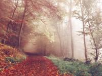 path-1031114_1920