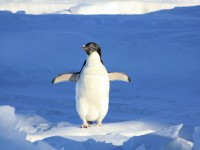 16049302711693656_by_hans3595_penguin-56101_1920