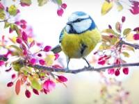 161903144210077108_by_hans3595_spring-bird-2295434_1920
