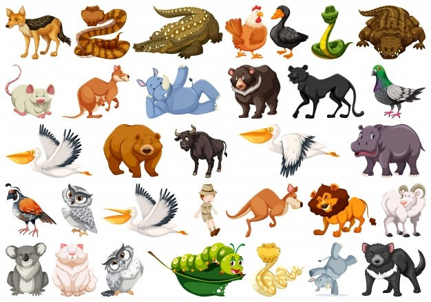 "Please write a short paragraph about ""Features of these animals"""