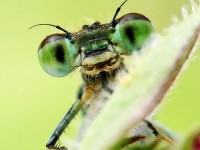 16327504436533700_by_Corey_Cole_insects_are_awesome_3029346557